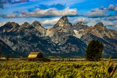 Yellowstone Nationalpark Bison stockbilder