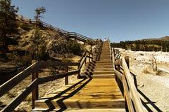 Yellowstone nationalpark, Mammoth Hot Springs Arkivfoto