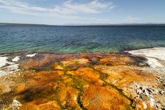 Yellowstone nationalpark, sjökust, WY, USA Arkivbilder