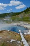 Yellowstone Nationalpark Waterhole Lizenzfreies Stockbild