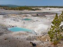 Yellowstone nationalpark, Wyoming, United States arkivbild