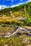Yellowstone nationalpark, Wyoming, USA Arkivbild