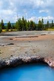 Yellowstone nationalpark, Wyoming, USA Fotografering för Bildbyråer
