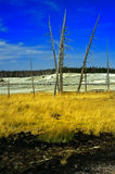 Yellowstone no.1 royalty free stock photography