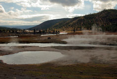 Yellowstone NP. Panorama of the Yellowstone national park, Wyoming Stock Images