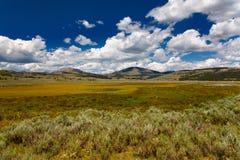 Yellowstone NP Imagen de archivo libre de regalías