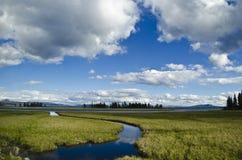 Yellowstone: Otwiera Dzikiego Zdjęcia Royalty Free