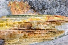 Yellowstone palettnedgångar, Mammoth Hot Springs Arkivfoton