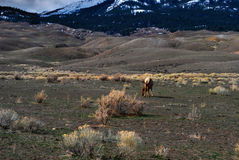 Yellowstone-Park Lizenzfreies Stockbild