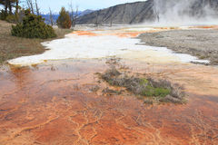 Yellowstone park narodowy 1 Zdjęcie Stock