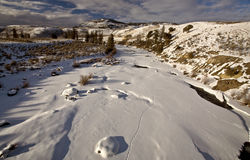 Yellowstone Park Wyoming. Winter Snow Royalty Free Stock Photography