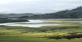 Yellowstone parka narodowego łąka Zdjęcia Royalty Free