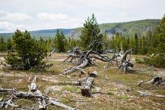 Yellowstone parka narodowego panorama Obraz Royalty Free
