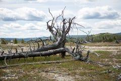 Yellowstone parka narodowego panorama Fotografia Stock
