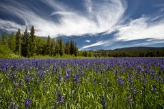 Yellowstone parka narodowego sceneria obrazy royalty free