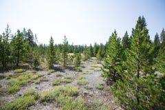Yellowstone parki narodowi Zdjęcia Stock