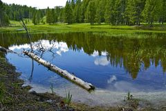 Yellowstone Pond Stock Images