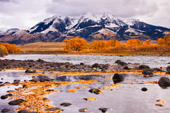 Yellowstone River & Absaroka Mountains. Cottonwood trees in peak fall color along the Yellowstone River at the base of the Absaroka Mountain Range, Montana Stock Photography