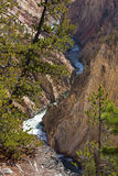 Yellowstone River Canyon Stock Photography