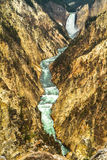 Yellowstone river crossing the canyon Royalty Free Stock Photos