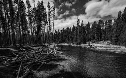 Yellowstone river and forest in black and white Royalty Free Stock Image