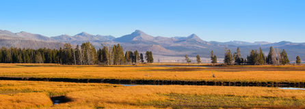 Yellowstone river landscape Royalty Free Stock Photo