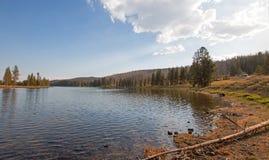 Yellowstone River nära Lehardy forsar i den Yellowstone nationalparken i Wyoming Förenta staterna Arkivfoton