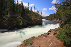 The Yellowstone River near Upper Falls Royalty Free Stock Images