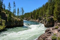 Yellowstone River no parque nacional, Wyoming Fotografia de Stock Royalty Free