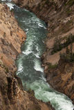 Yellowstone River. Rushing through a canyon royalty free stock images