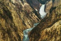 Yellowstone River som korsar kanjonen Arkivfoton