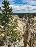 Yellowstone River und Schlucht Lizenzfreie Stockbilder