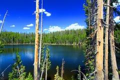 Yellowstone Scaup jeziora krajobraz Zdjęcia Royalty Free