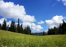 Yellowstone semesterflykt Arkivfoto