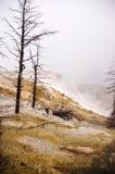 Yellowstone terraces Stock Photos