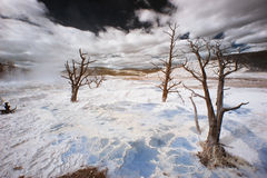 Yellowstone Terraces, Infarred Stock Images