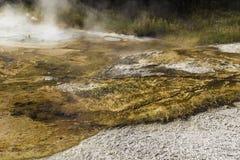 Yellowstone Thermische Stoom Royalty-vrije Stock Afbeeldingen
