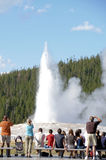 Yellowstone Tourist Royalty Free Stock Image