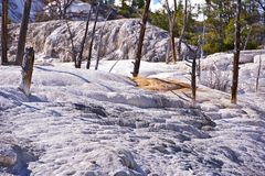 Yellowstone Travertine Stock Image