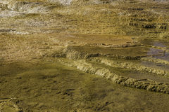 Yellowstone vaggar textur Royaltyfri Foto