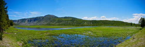 Yellowstone Wetland Royalty Free Stock Photo