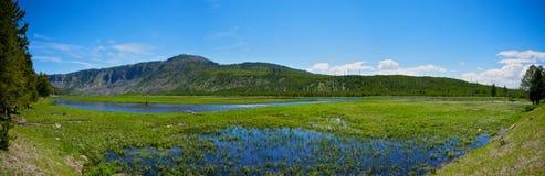 Yellowstone Wetland Royalty Free Stock Photo
