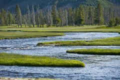 Yellowstone Wilderness Stock Image
