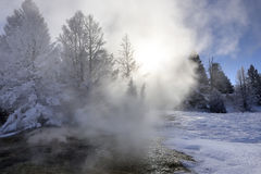 Yellowstone Winter Forest Stock Photos