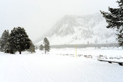 Yellowstone Winter Road Snowing Royalty Free Stock Photography