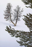 Yellowstone Winter Scenic Royalty Free Stock Image