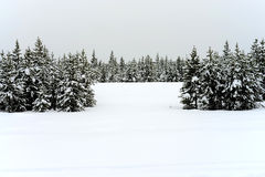 Yellowstone Winter Snow Stock Images
