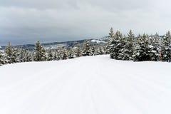 Yellowstone Winter Snow Stock Photo