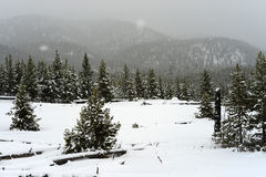 Yellowstone Winter Snow Stock Photos