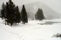 Yellowstone Winter Snow Royalty Free Stock Image
